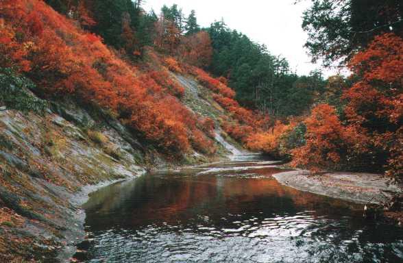 赤水渓谷の紅葉